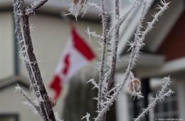 Canadian Hoar Frost